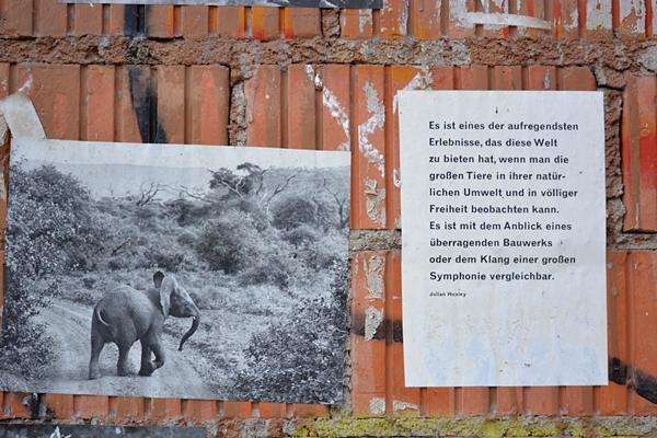 Pierre Engelmann Milk&Sugar Elefant